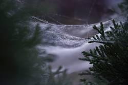 WeihnachtsSpinnerei