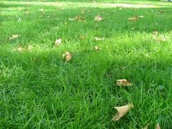 Fünf vor Herbst