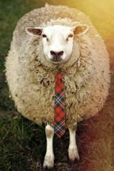 schickes Schaf
