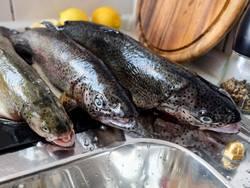 Frischer Fisch 2