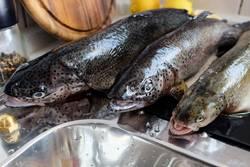 Frischer Fisch 3