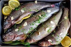 Frischer Fisch 5