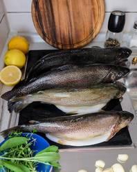 Frischer Fisch 1