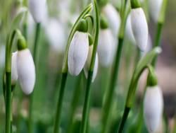 Frühlingsgarde 1