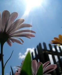 Unter den Blumen ll