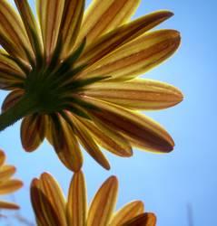 Unter den Blumen lll