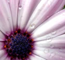 ...wenn Blumen weinen.