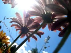 Unter den Blumen l