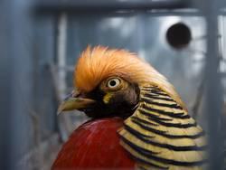 Ein Vogel namens Firle-Franz