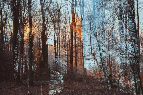 Waldwischwasch mit Turm