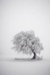 Baumloben | Stille