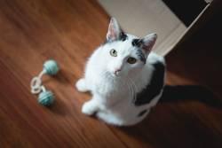 catcontent | Spielst du mit mir?