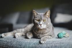 04_Katze, pardon Kater auf Sofa