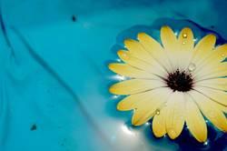 Blumenwasser