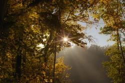 Sonnenstrahlen scheinen durch herbstliche Waldlandschaft
