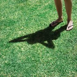 Shadowfly