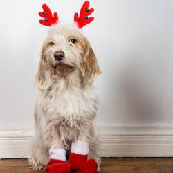 Wie? Du sollst der Weihnachtsmann sein?