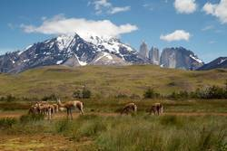 Patagonien / Torres des Paine