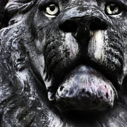 ergrauter Löwe
