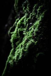 kleiner, grüner Zwerg