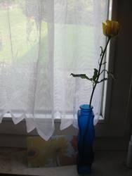 Rosengruß aus der Ferne