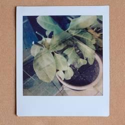 a random plant