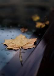 Herbst auf Auto