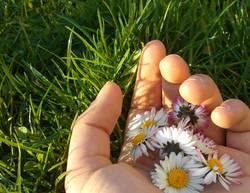 Eine Hand voll Sommer