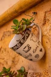 Morgen Kaffee mal anders - Pflanze in Tasse - Dekoidee