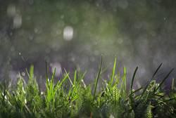 Regenfall
