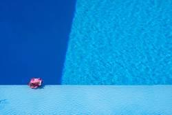 Blüte am Pool