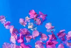 Blüten am Pool