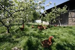 Frühling auf dem Bauernhof