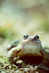 kiss me i'm a frog