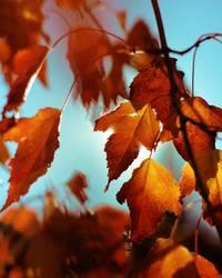 Heißer Herbst