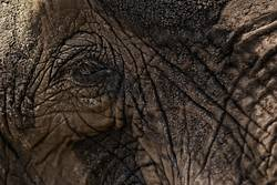 magical elephant eye