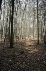 Wald bei Weltenburg