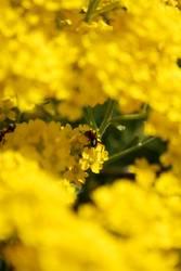 Ich wär so gerne eine Biene...