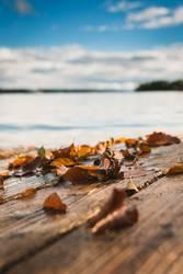 leafs, lake, love