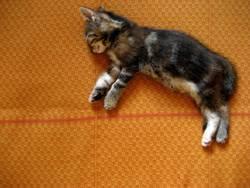 Babykatze, die im Traum fliegt