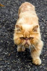 Auch Katzen haben es nicht immer leicht