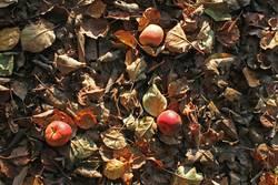 Apfellager für Lageräpfel