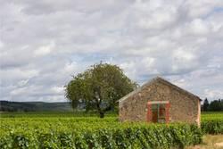 Im Burgund