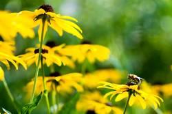 Beginn der Bienenzeit