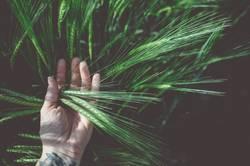 AST9 | Korn liegt auf der Hand