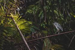 Schräger Vogel II