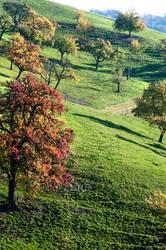 Herbstobstbäume