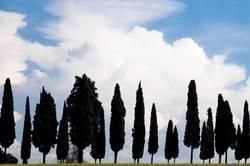 Römische Bäume