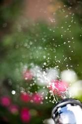 für dich solls bunte bilder regnen