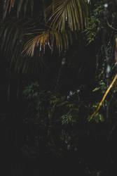 Dschungeltapete